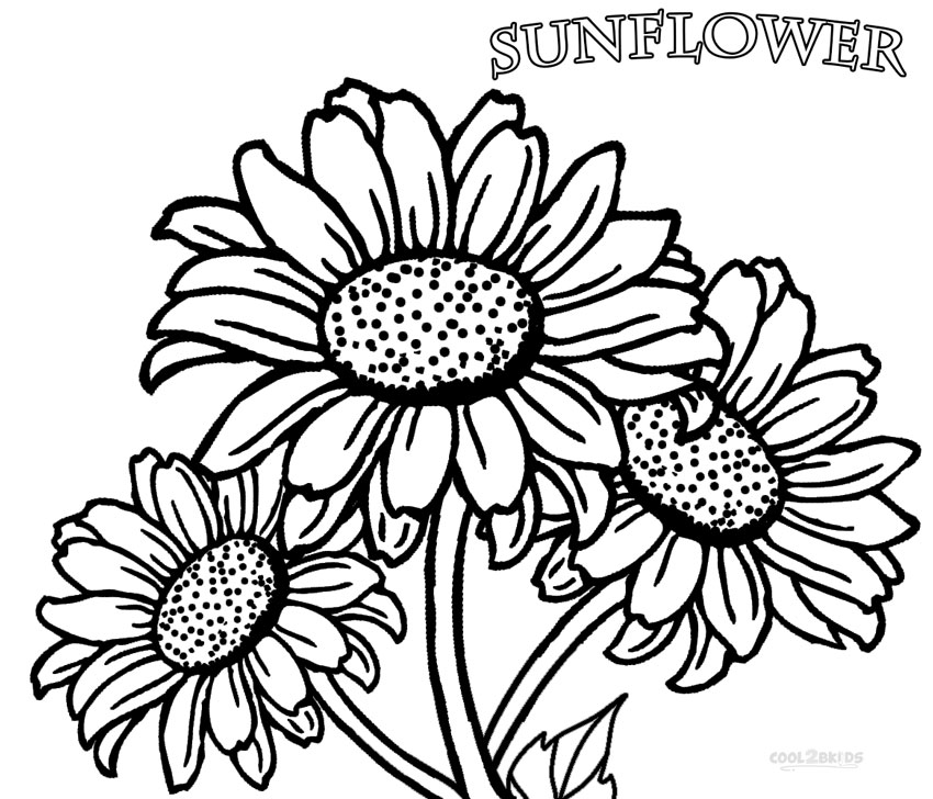 sunflower coloring printable sunflower coloring pages ideas stpetefestorg coloring sunflower
