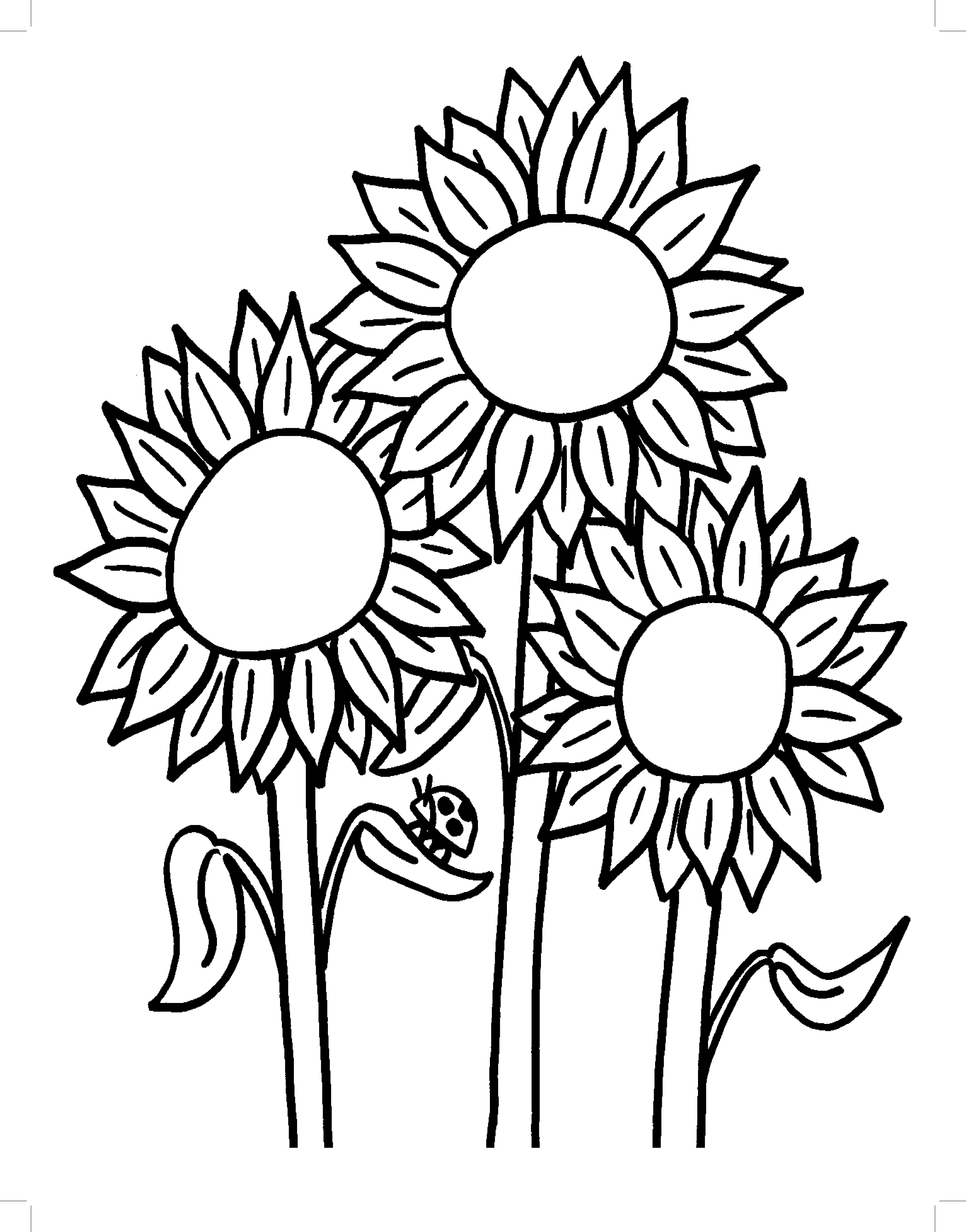 sunflower coloring sheets simple sunflower drawing at getdrawings free download sheets coloring sunflower