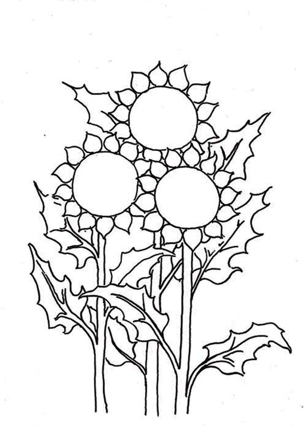 sunflower coloring sheets sunflower coloring page tct voice video data sheets sunflower coloring