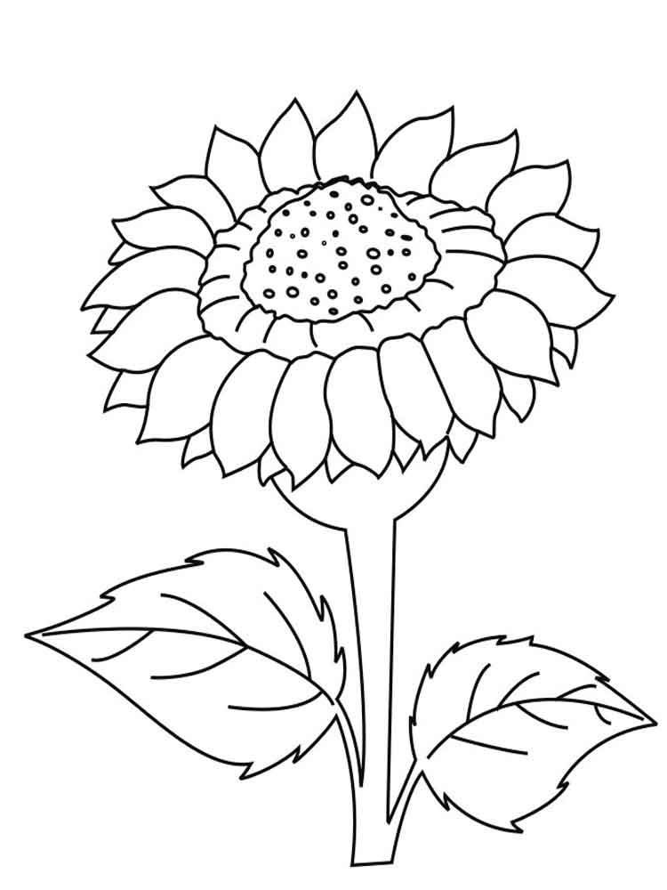 sunflower coloring sheets sunflower drawing easy at getdrawings free download coloring sheets sunflower