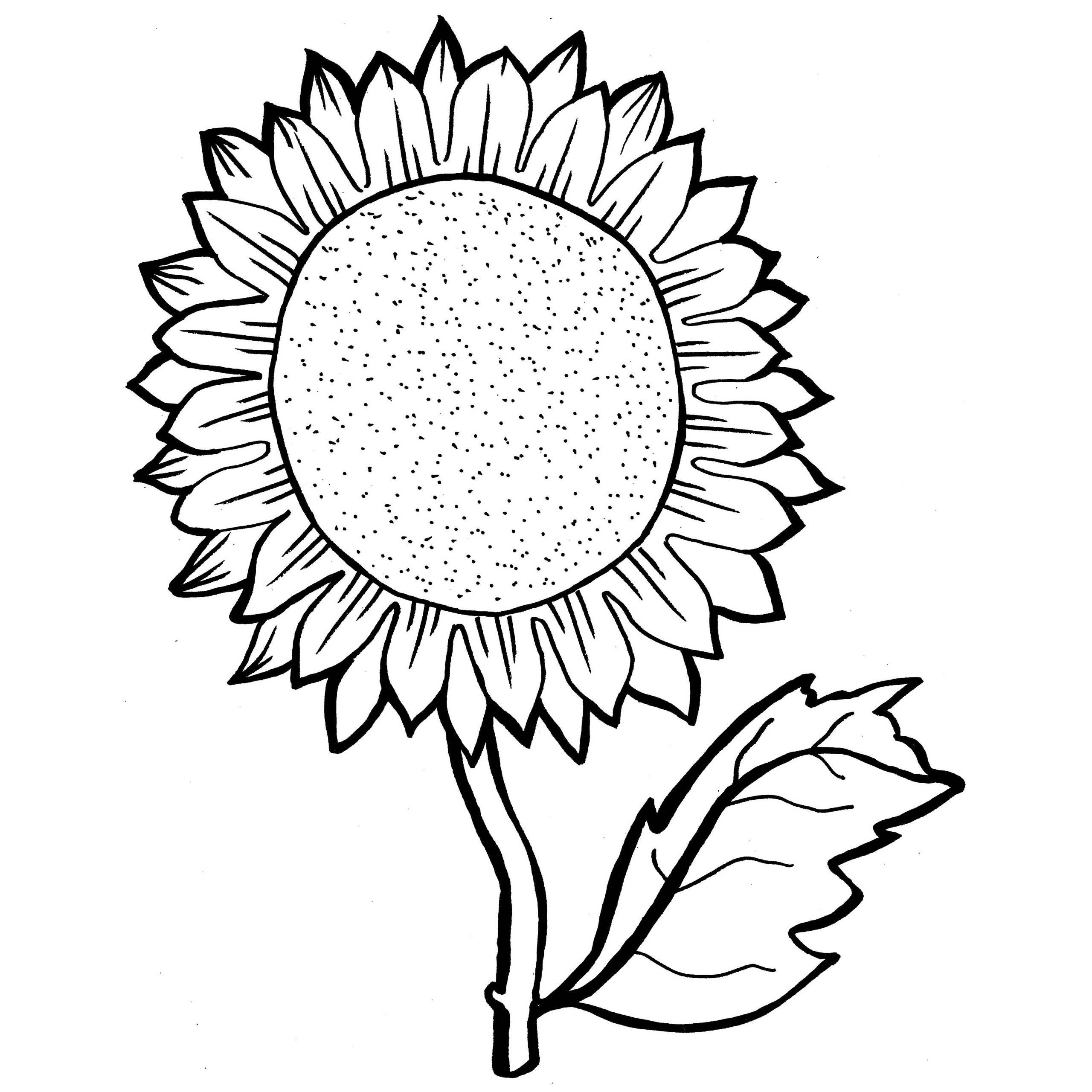 sunflower coloring sunflower coloring page at getdrawings free download sunflower coloring