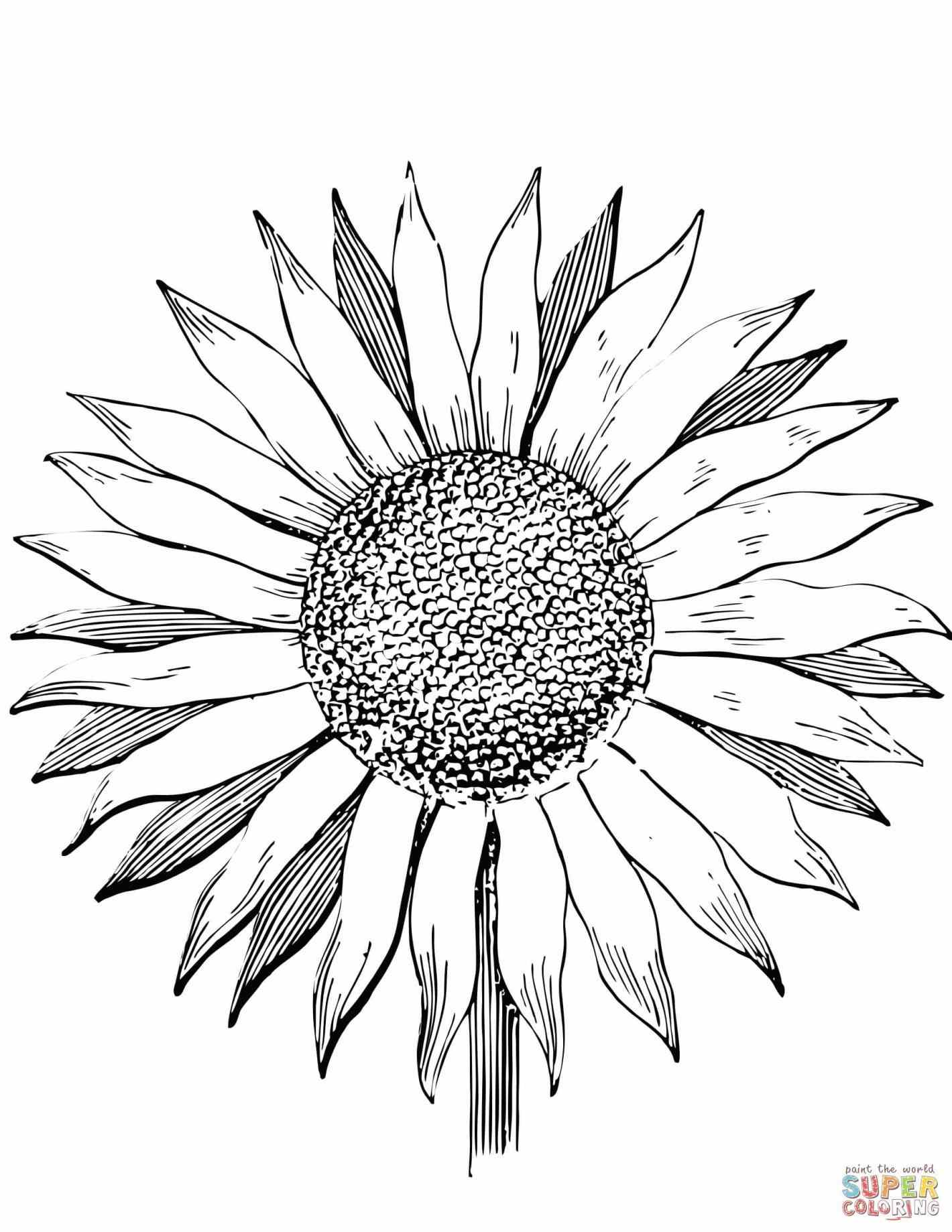 sunflower coloring sunflower drawing template at getdrawings free download sunflower coloring