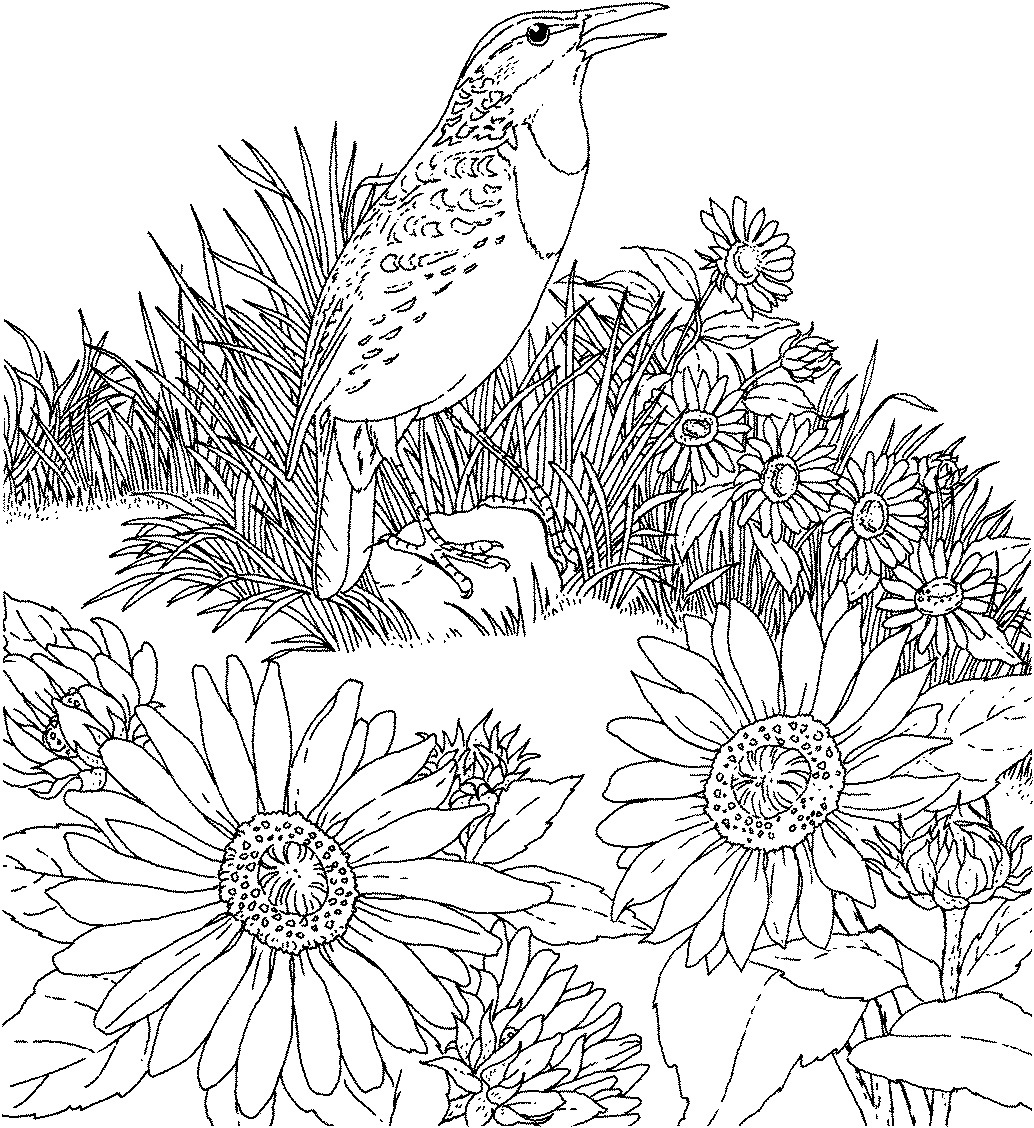sunflower coloring sunflowers 8 12 x 11 printable coloring page color with sunflower coloring