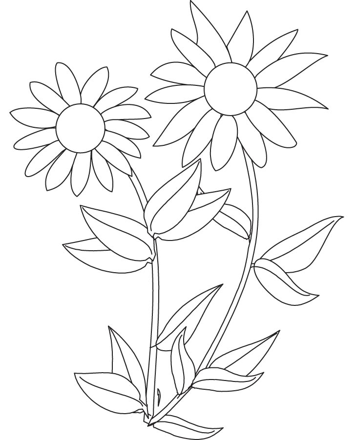 sunflower coloring sunflowers clipart to color 20 free cliparts download coloring sunflower