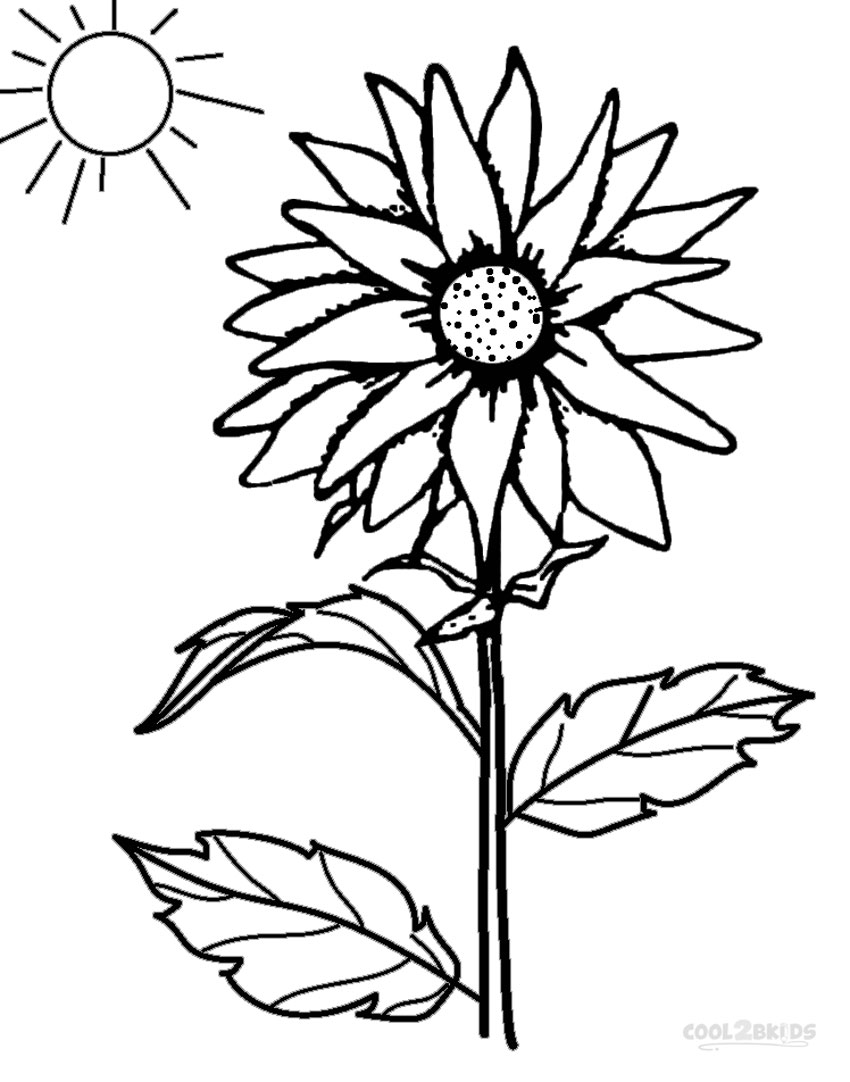 sunflower pictures to colour in simple sunflower drawing at getdrawings free download sunflower pictures colour to in