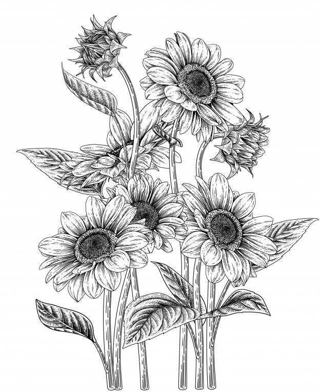 sunflower sketch how to draw sunflower youtube sketch sunflower