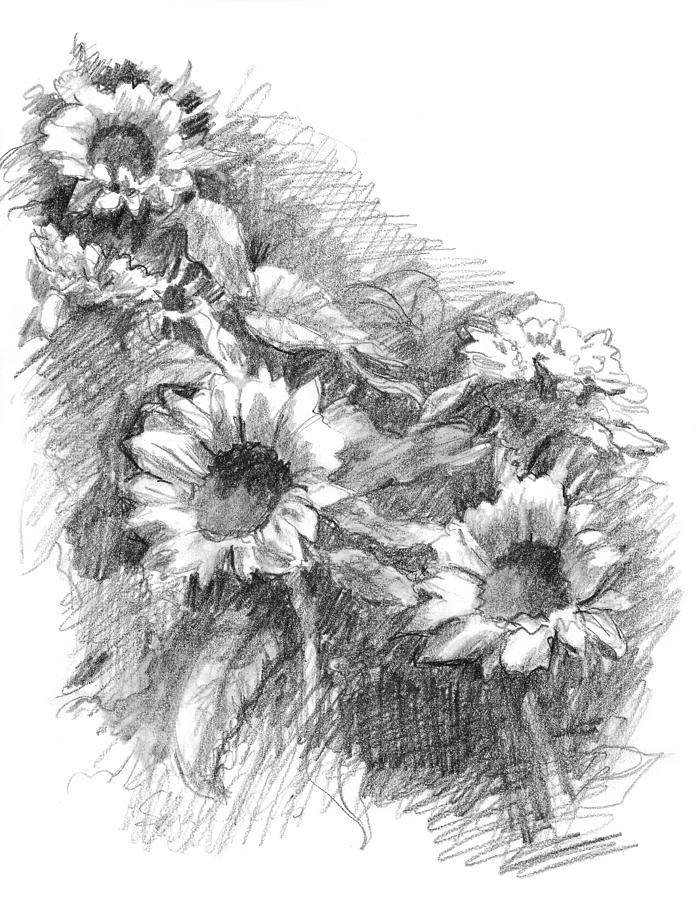 sunflower sketch sunflower drawing by bari rhys sunflower sketch