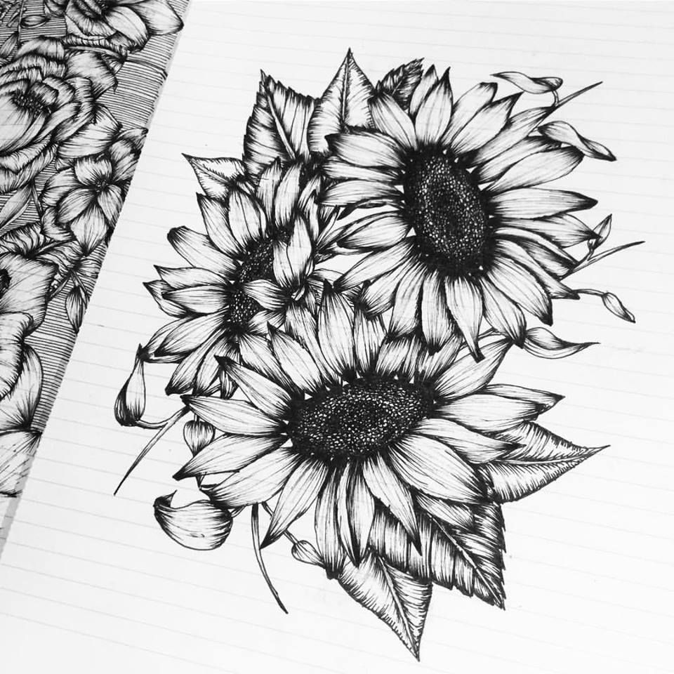 sunflower sketch sunflower drawing by pam belcher sunflower sketch