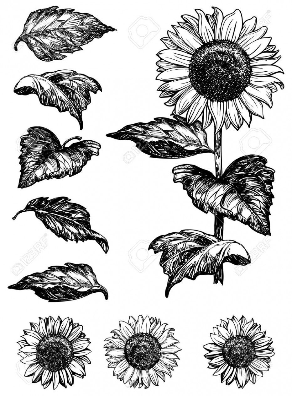 sunflower sketch sunflower drawing drawing sketch sunflower