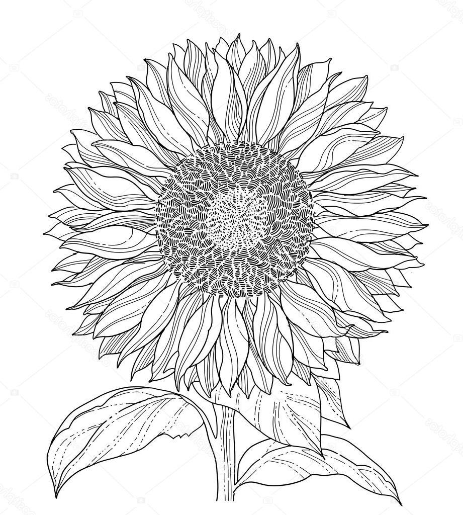 sunflower sketch sunflower flower sun drawing draw blackandwhite sketch sunflower