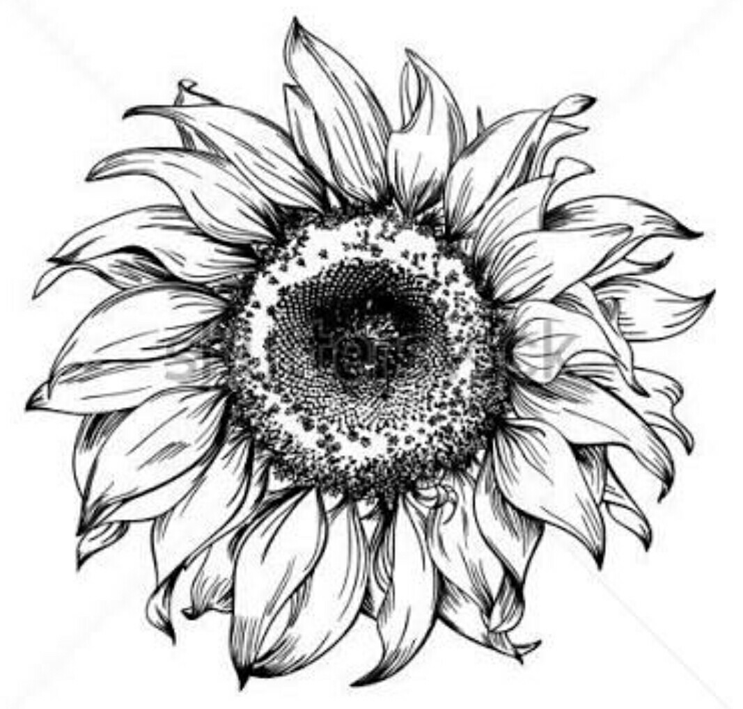 sunflower sketch sunflower line drawing etsy sunflower sketch