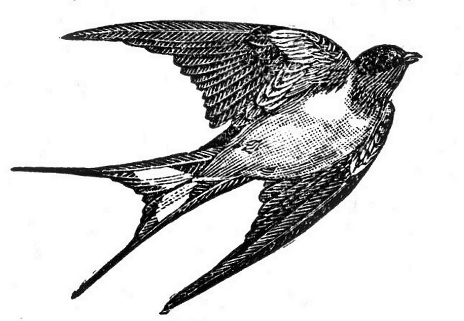 swallow bird drawing hirondelle et plumes swallow swaĺlowtattoo feather bird swallow drawing