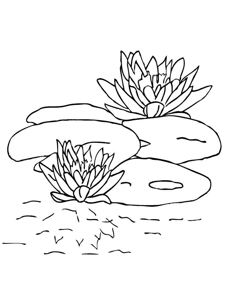 swamp coloring page page with black and white illustration of swamp for coloring swamp page