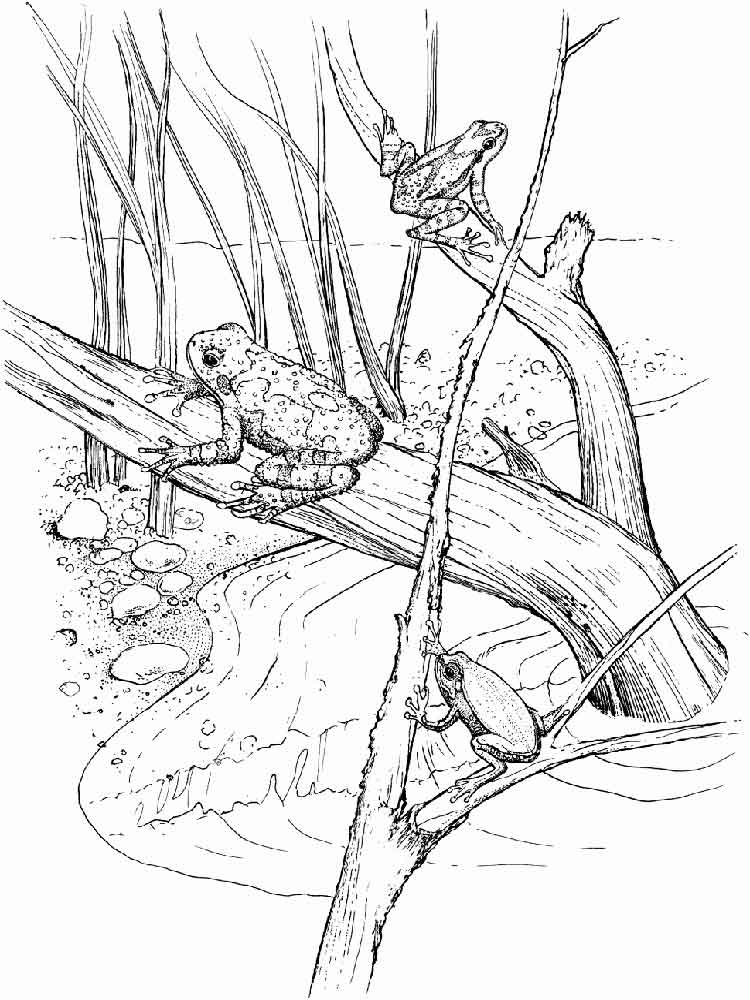 swamp coloring page swamp art coloring pages coloring swamp page