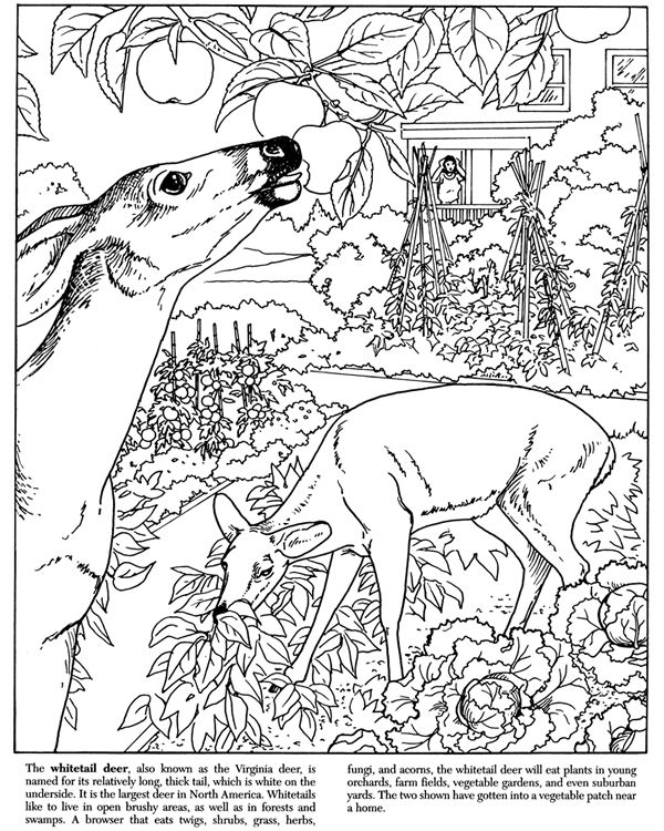 swamp coloring page swamp coloring pages coloring pages to download and print page coloring swamp