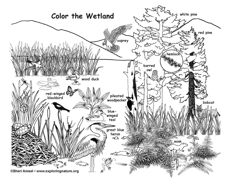swamp coloring page wetland coloring page coloring page swamp