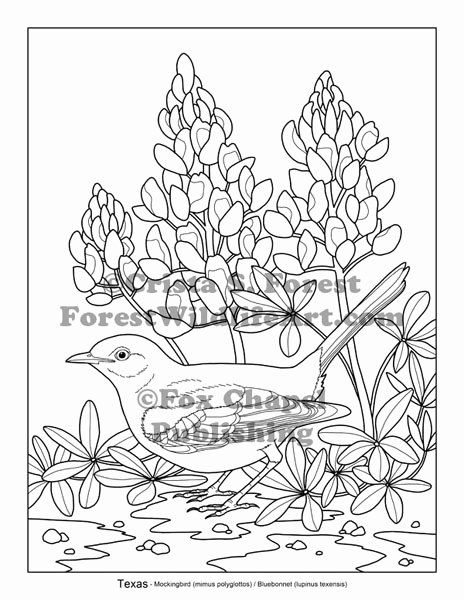 texas state flower free bluebonnet cliparts download free clip art free flower state texas