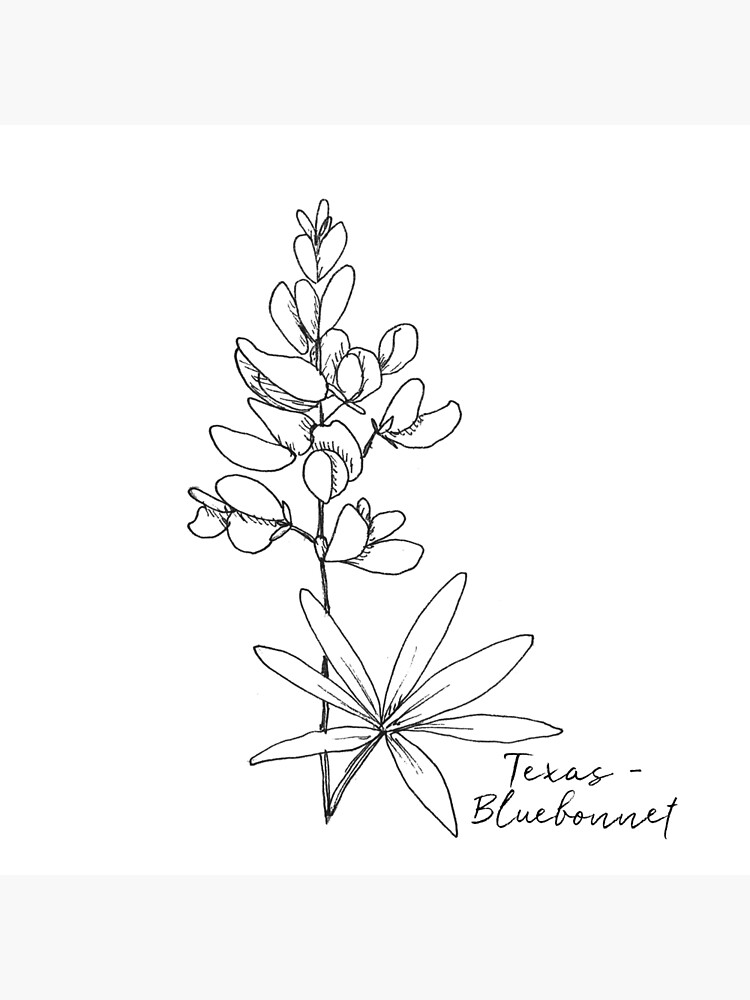 texas state flower quottexas bluebonnet state flower illustrationquot magnet by texas flower state