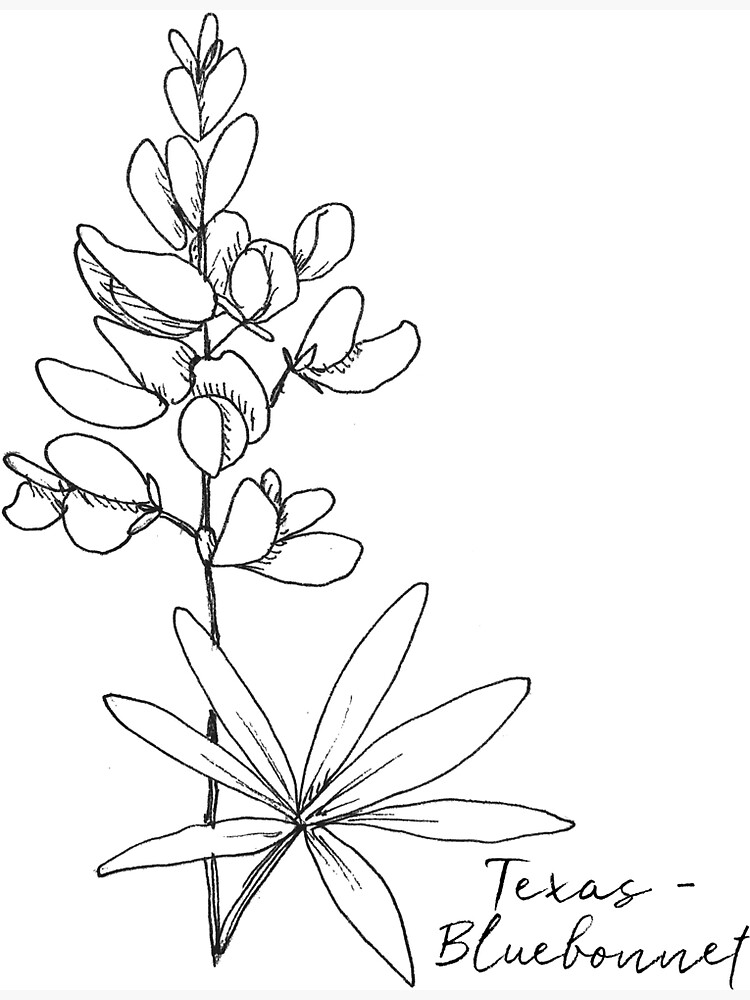 texas state flower state flower coloring pages texas state flower coloring state flower texas