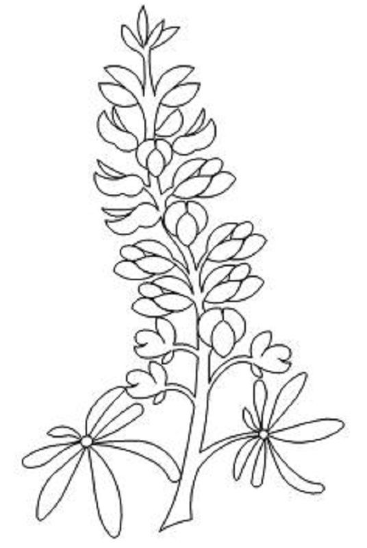 texas state flower usa states state of texas coloring pages state texas flower
