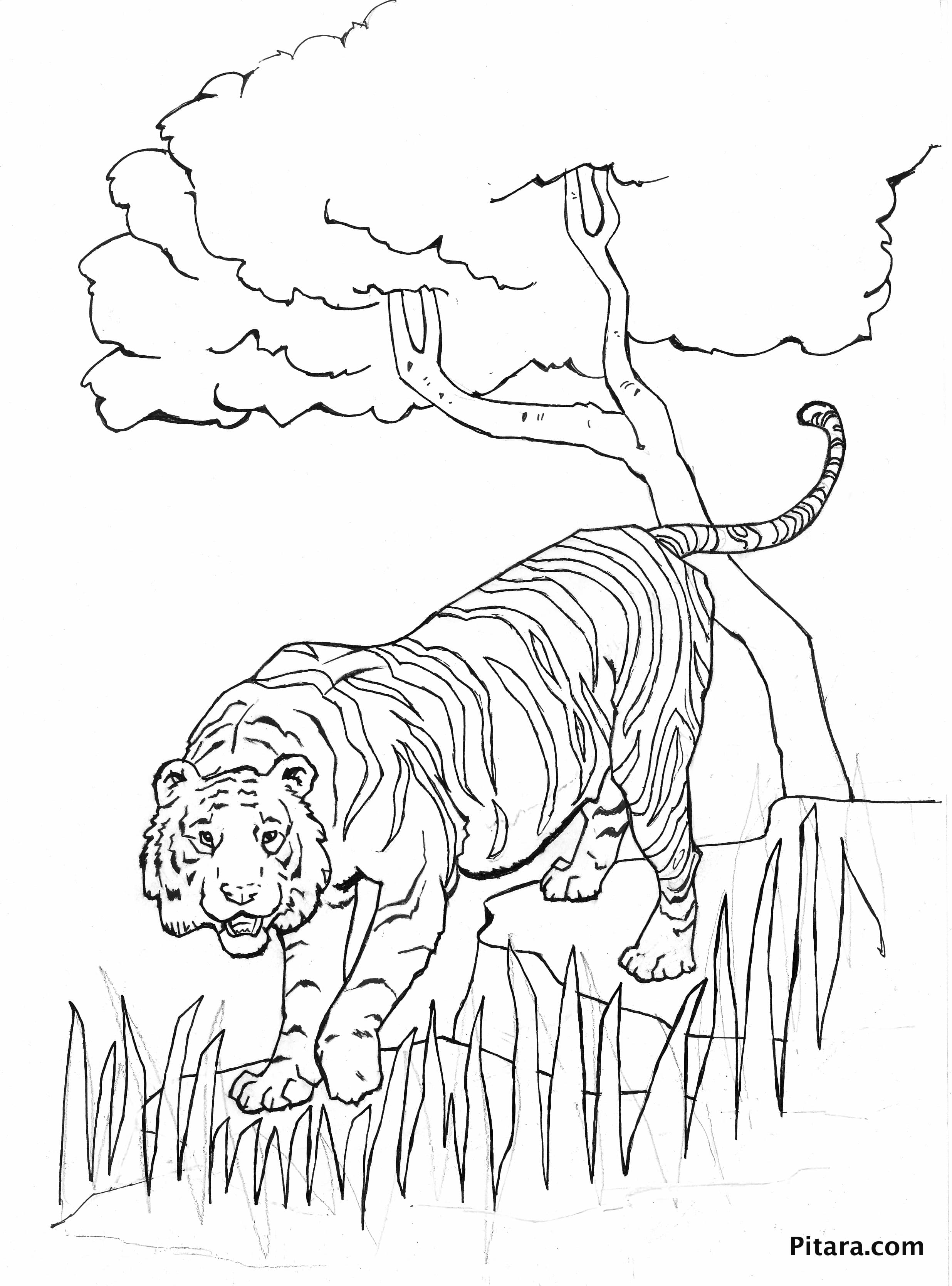 tiger coloring games tigers to download tigers kids coloring pages tiger games coloring