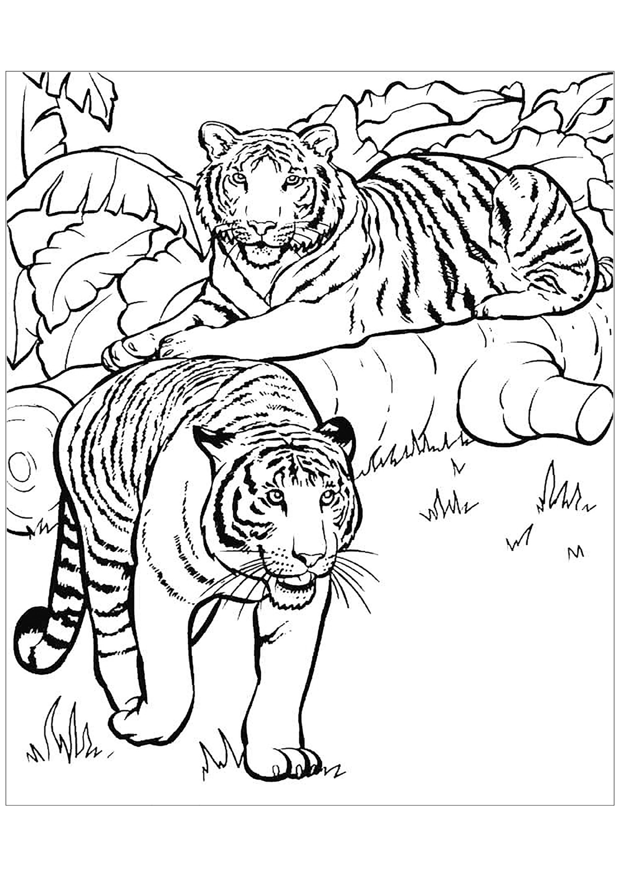tiger coloring games tigers to print for free tigers kids coloring pages coloring games tiger