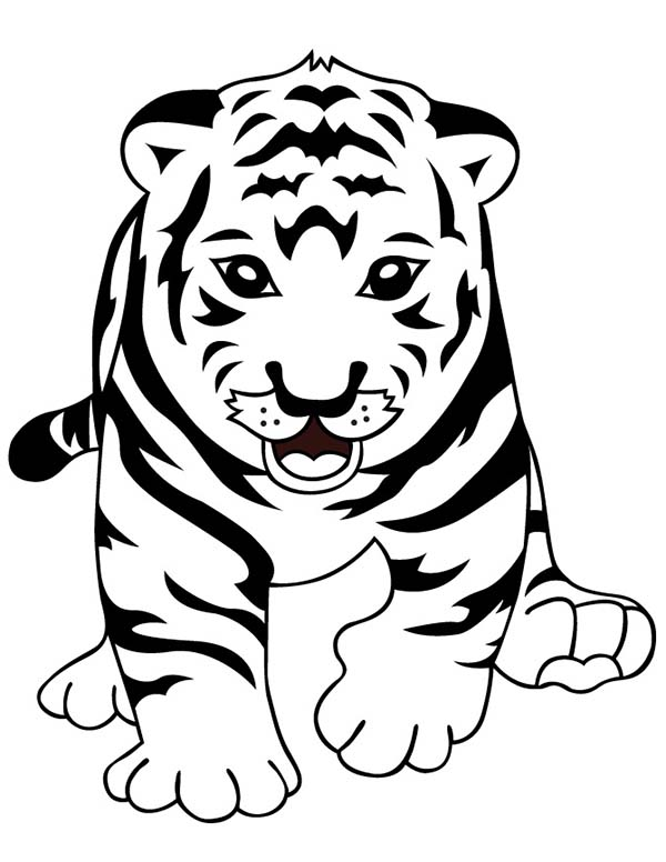 tiger cub coloring pages a cute roaring of little tiger cub coloring page cub tiger pages coloring