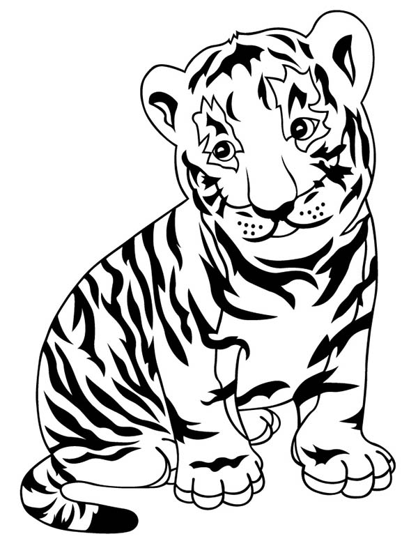tiger cub coloring pages coloring pages tiger cubs coloring home cub coloring pages tiger