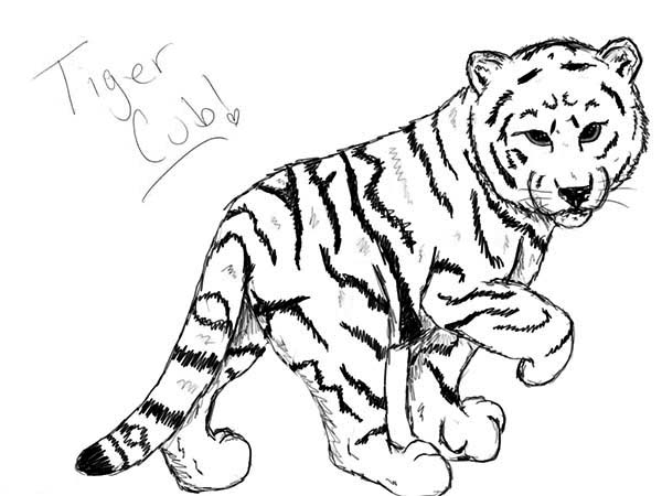 tiger cub coloring pages cute tiger cub coloring page places to visit pinterest pages tiger coloring cub