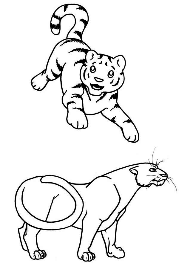 tiger cub coloring pages tigers two tiger cubs in a wicker basket coloring page cub tiger coloring pages