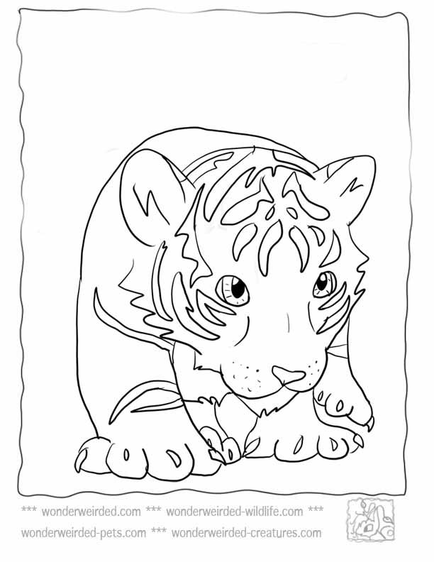 tiger cubs coloring pages 17 best images about lions and tigers on pinterest coloring pages cubs tiger