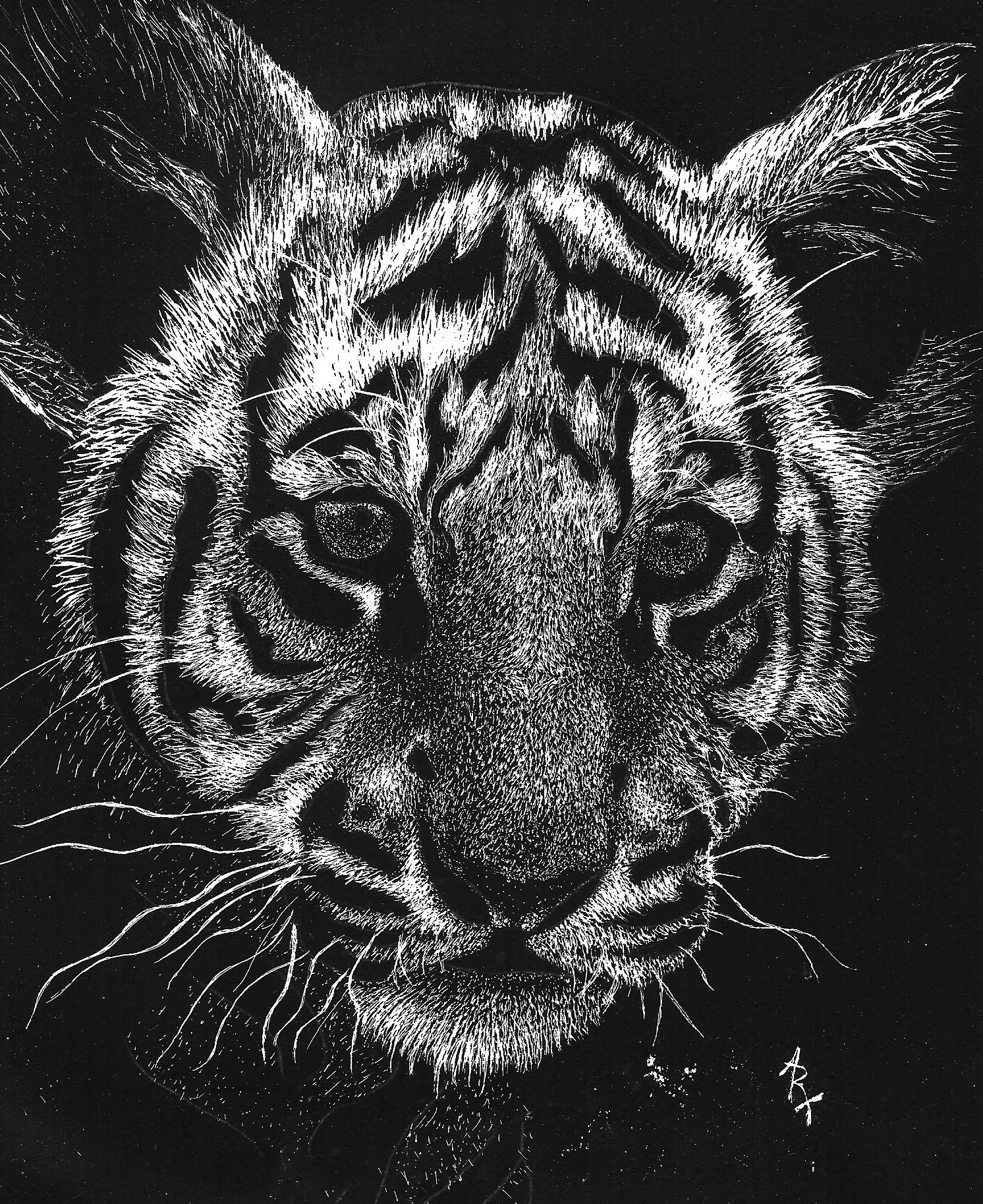 tiger drawing amur tiger face big cat ink illustration drawing by loren drawing tiger
