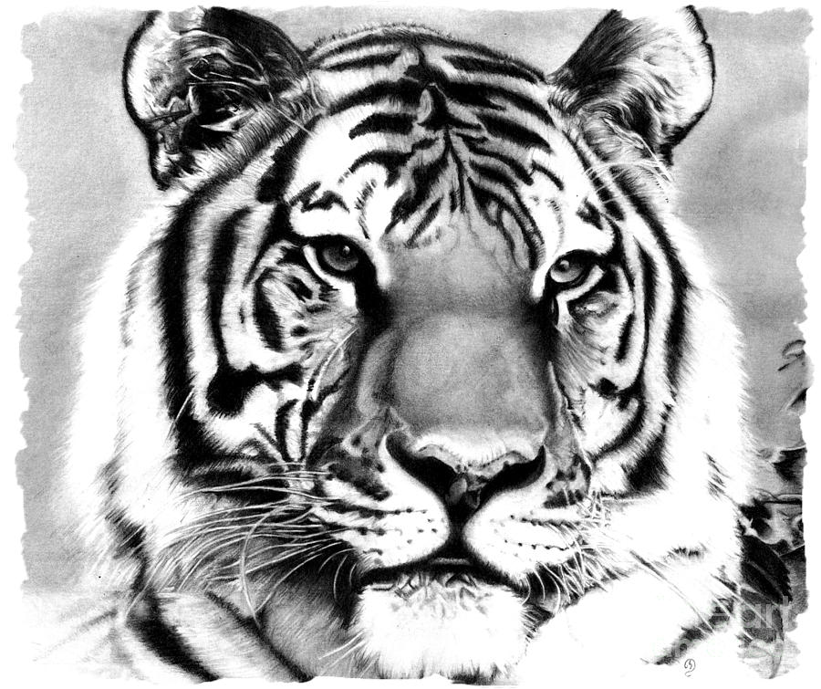 tiger drawing black and white tiger drawing by quelchii on deviantart drawing tiger