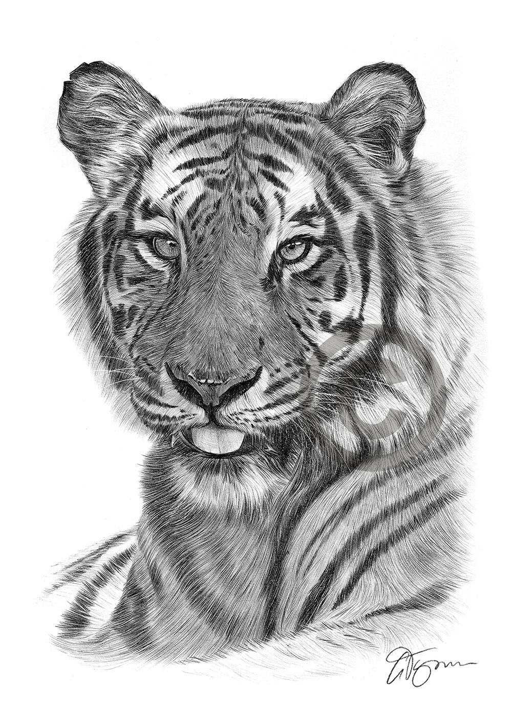 tiger drawing drawing of a roaring tiger by jasminasusak on deviantart drawing tiger