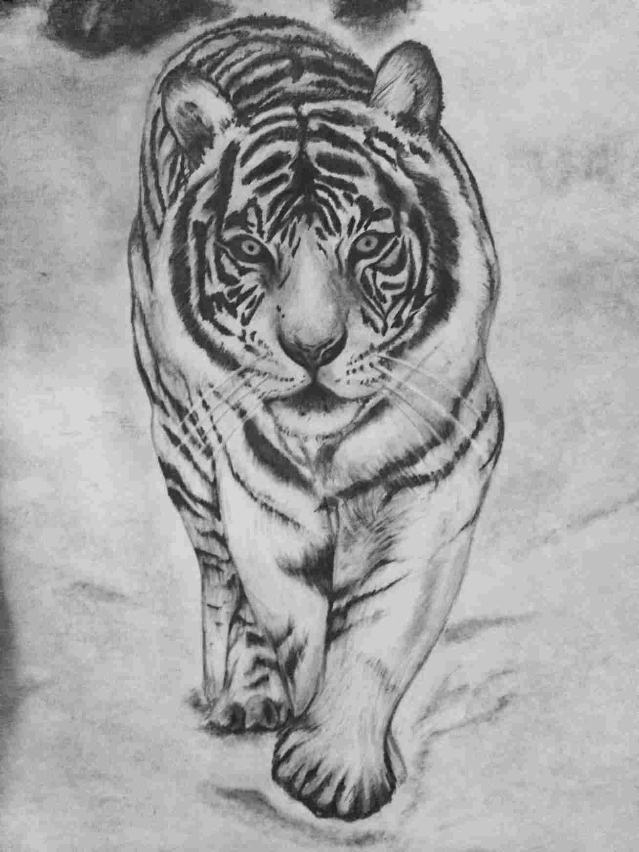 tiger drawing eyes of the tiger drawing by shawn stallings drawing tiger