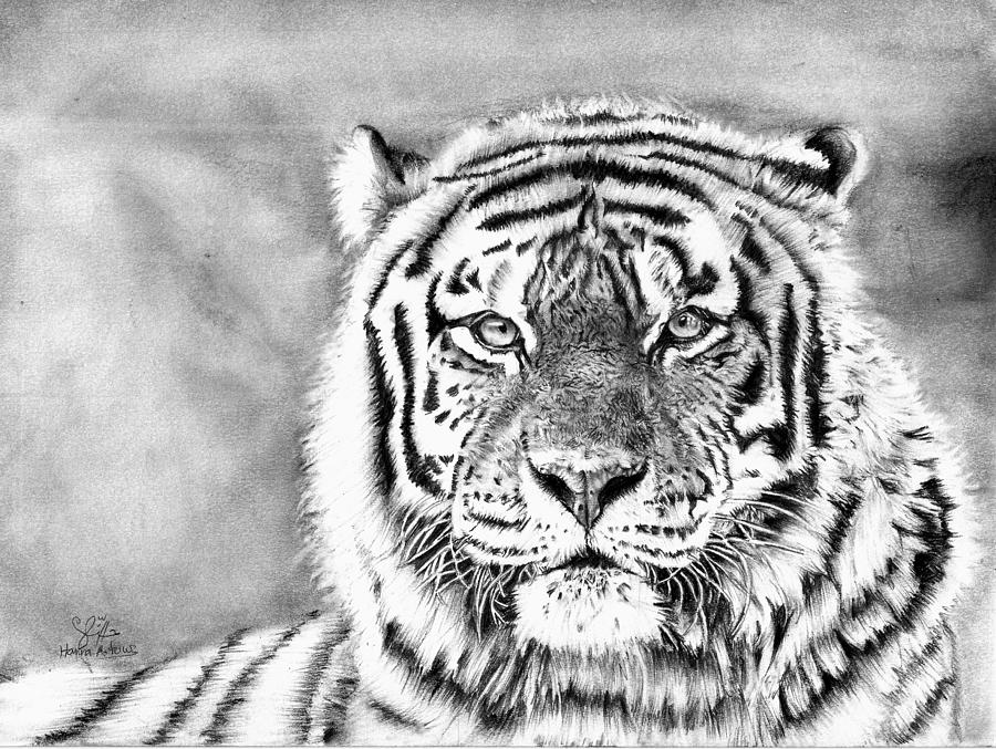 tiger drawing how to draw siberian tiger full body drawing step by step tiger drawing
