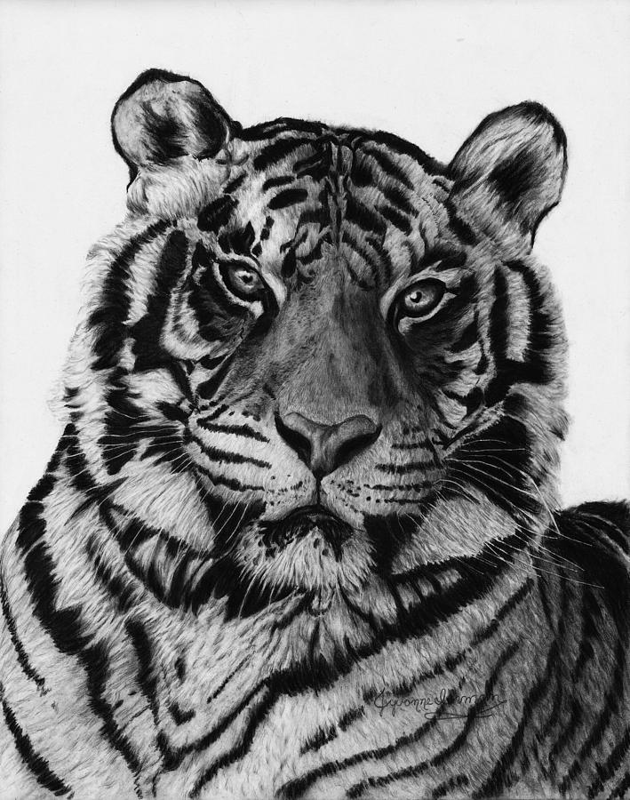 tiger drawing premium vector tiger head hand draw sketch monochrome on tiger drawing