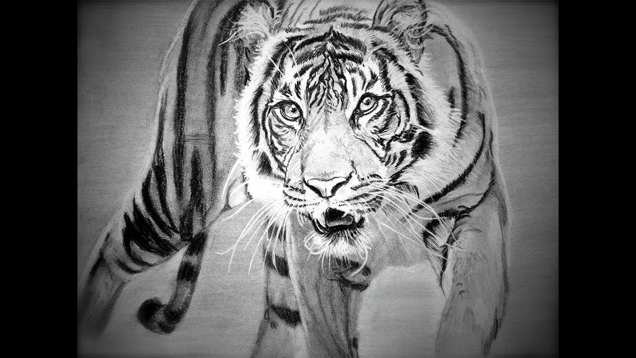 tiger drawing striped contemplation tiger pencil drawing onlypencilcom drawing tiger