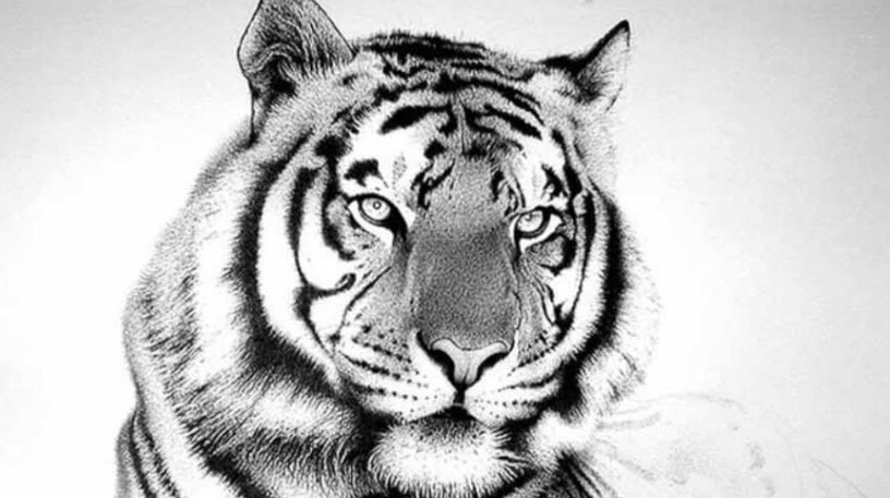 tiger drawing tiger drawing by joshuabeatson on deviantart drawing tiger