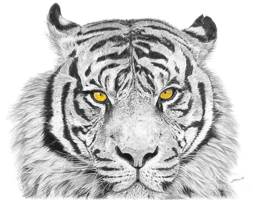 tiger drawing tiger drawing by sohaib95 on deviantart drawing tiger