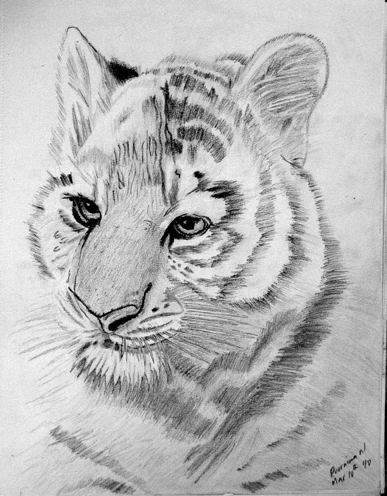 tiger drawing tiger head drawing at paintingvalleycom explore tiger drawing