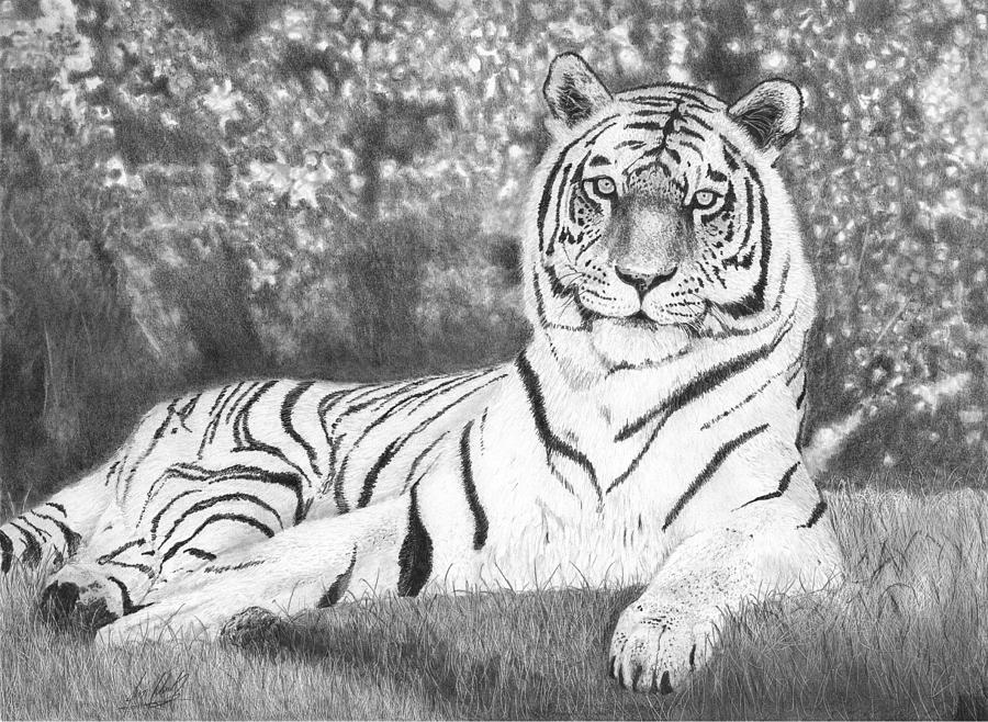 tiger drawing tiger pen drawing at paintingvalleycom explore drawing tiger