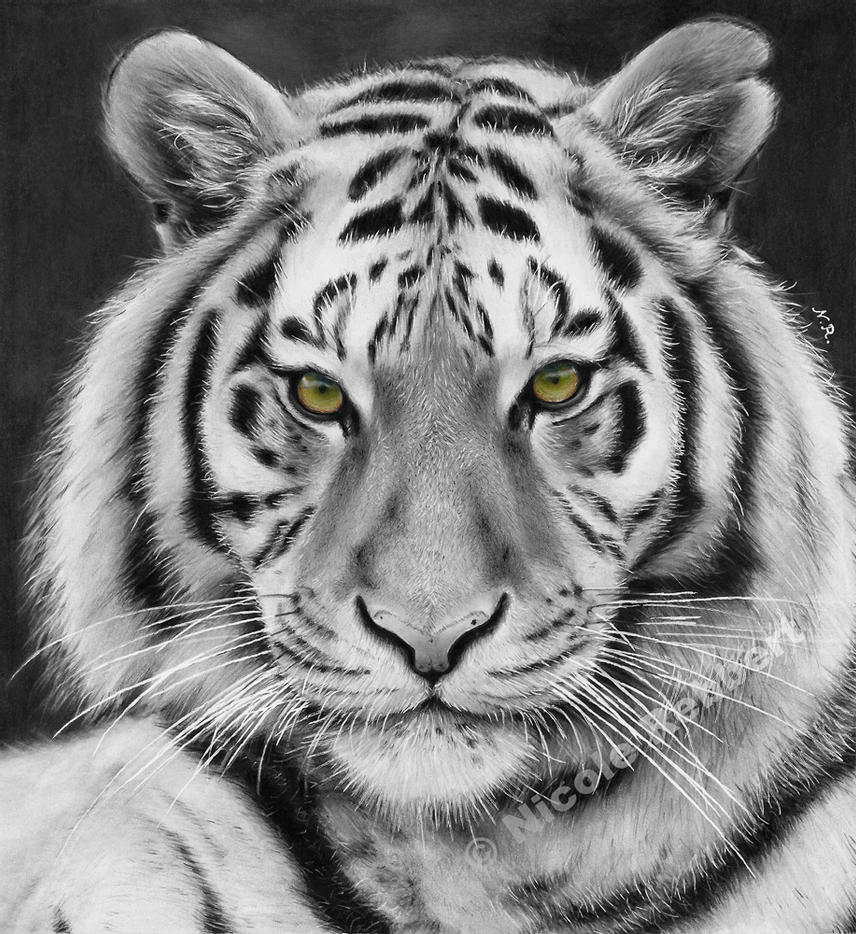 tiger drawing tiger pencil drawing by tricepterry on deviantart tiger drawing