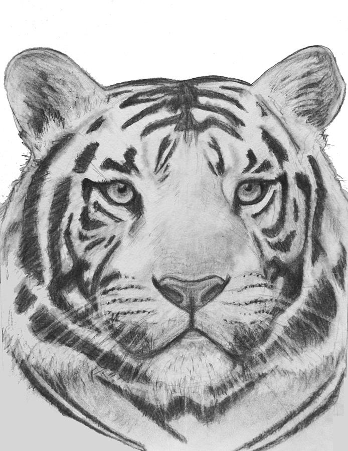 tiger drawing tiger tattoo by yankeestyle94 on deviantart tiger drawing