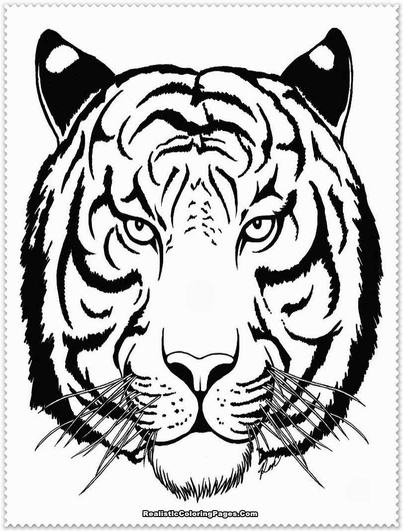 tiger face coloring tiger face outline drawing at getdrawings free download coloring face tiger