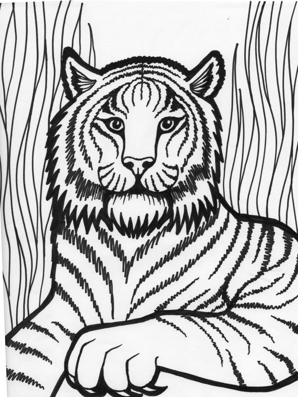 tiger face coloring tiger face outline drawing at getdrawings free download tiger face coloring