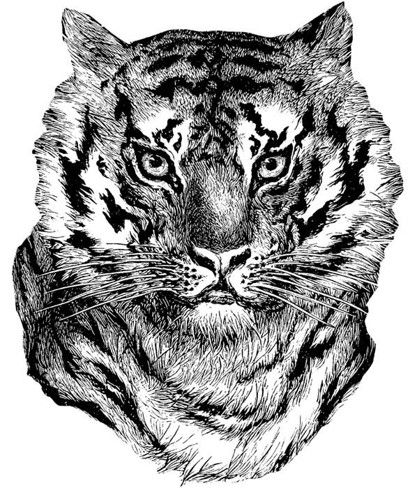 tiger face coloring welcome to dover publications zentangle animals coloring face tiger