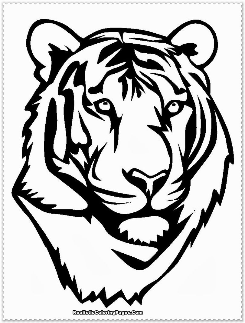 tiger face coloring white tiger head printables google search tiger face face coloring tiger