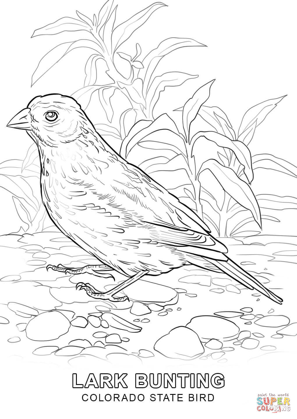 tn state bird florida coloring page at getcoloringscom free printable tn state bird
