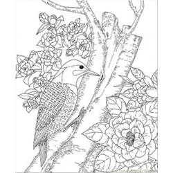 tn state bird popular 200 coloring pages weekly updated tn bird state